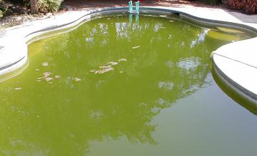 средства-для-дезинфекции-воды-бассейна-купить-в-гомеле