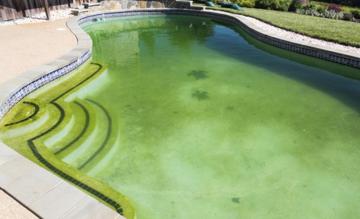средства-для-удаления-водорослей-бассейна-купить-в-гомеле